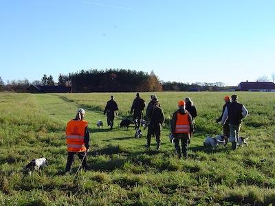jagtprøve mark til intensivt jagttegn kursus